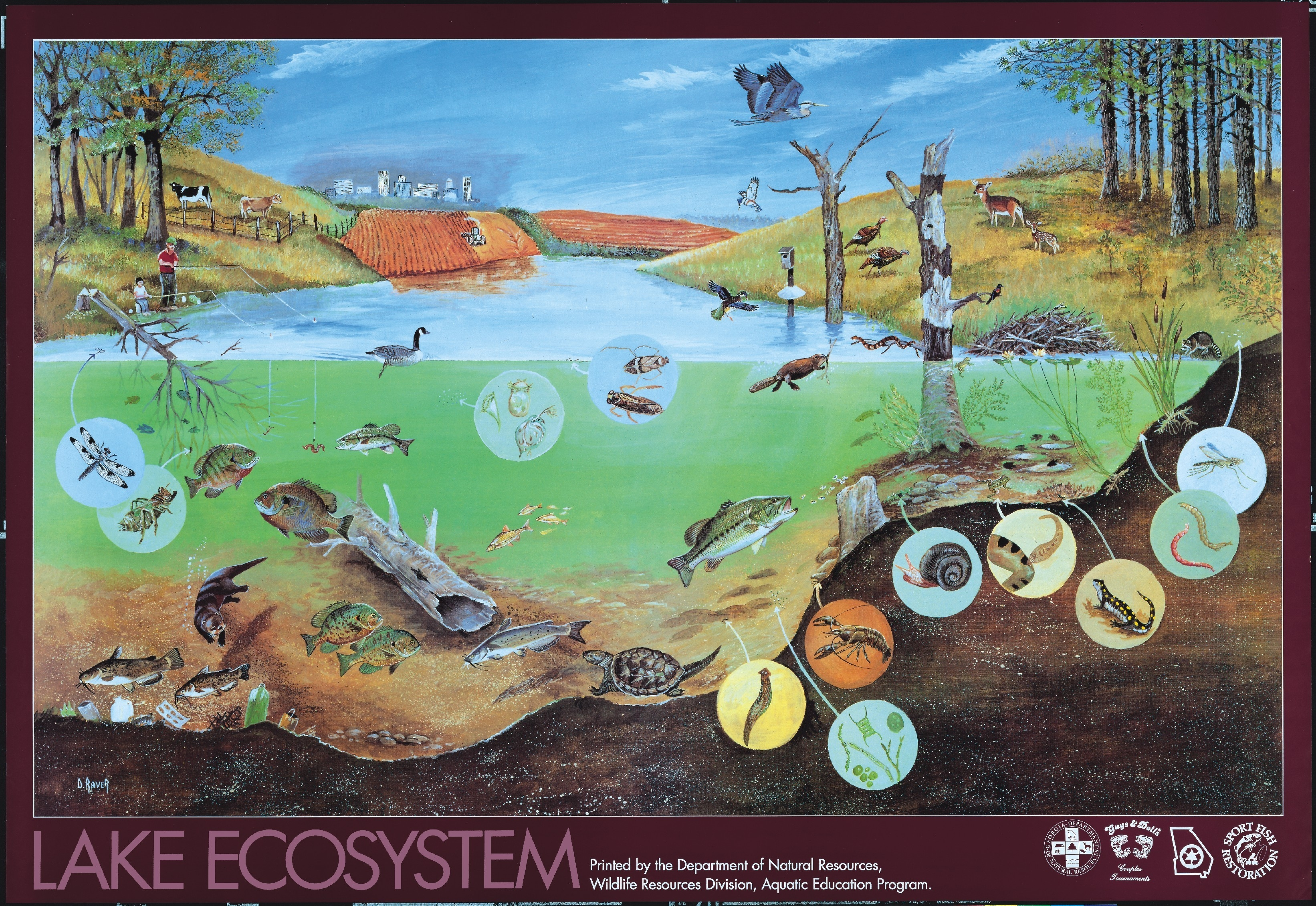 All Types Of Ecosystems | Ecosystem A Community And Its Habitat An intended for Community Animals Example 18891