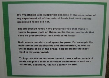 Conclusion Examples For Science Fair Project   World Of Example throughout Conclusion Examples For Science Fair Project 18991