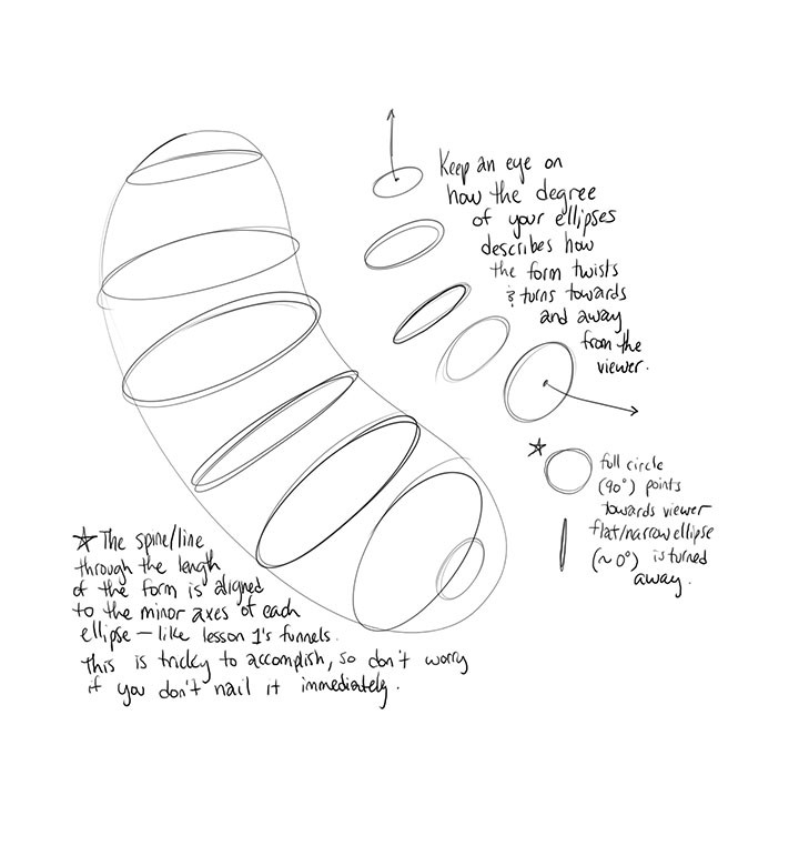 Lesson 2: Organic Forms, Contour Lines, Dissections And Form in Form Drawing Exercises 23726