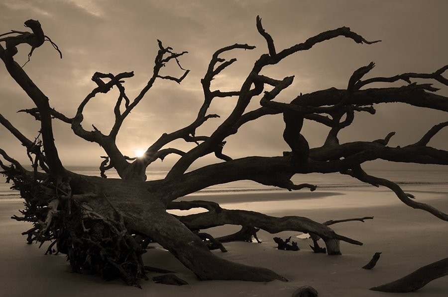 Thomas Even Photography Blog: The Dynamic Landscape - Jekyll Island with Organic Shape Photography 23847