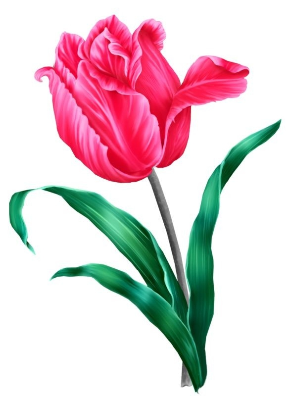 107 Best Print:sticker-Flora Images On Pinterest   Painted Flowers with regard to Flower Sticker Png 30439