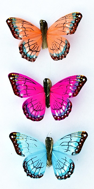 Butterflies | Mark Richards Enterprises intended for Butterfly Stickers For Scrapbooking 26493