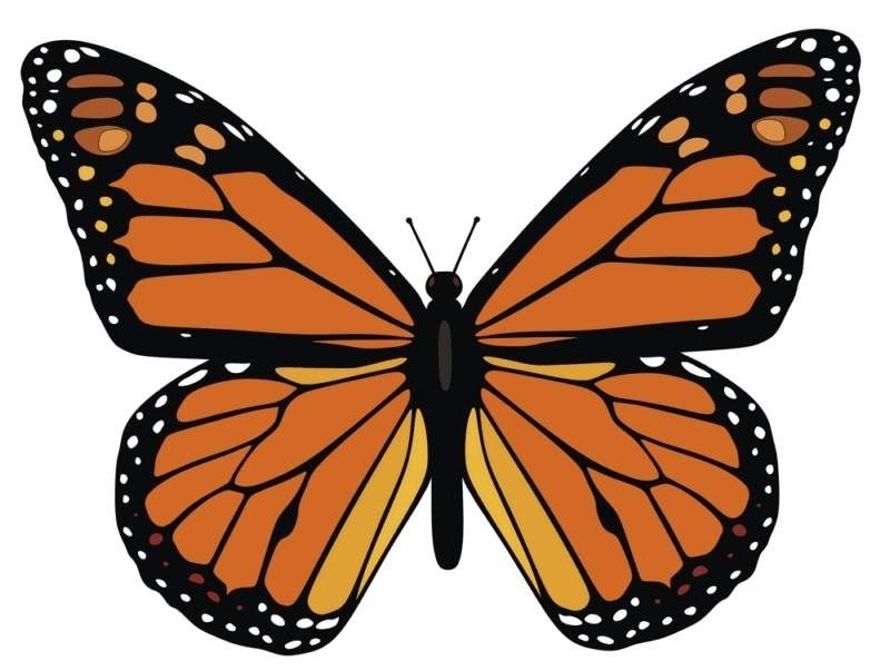 Monarch Butterfly Template | World Of Example within Monarch Butterfly Template 29350