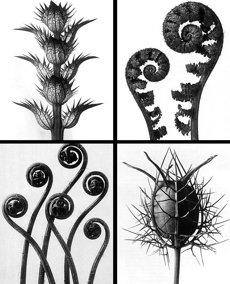 Original Forms Of Art – Karl Blossfeld throughout Organic Shapes In Nature Art 25643
