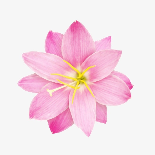 Pink Flower Sticker, Decoration, Flowers, Plant Png Image And for Flower Sticker Png 30439