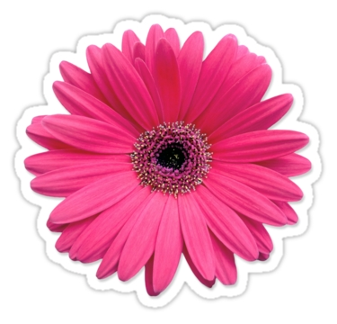 "Pink Gerbera Gerber Daisy Flower Stickers"" Stickers By Wasootch for Flower Sticker Png 30439"