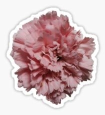 Realistic Flower: Stickers | Redbubble for Realistic Flower Stickers