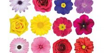 Realistic Flower Stickers