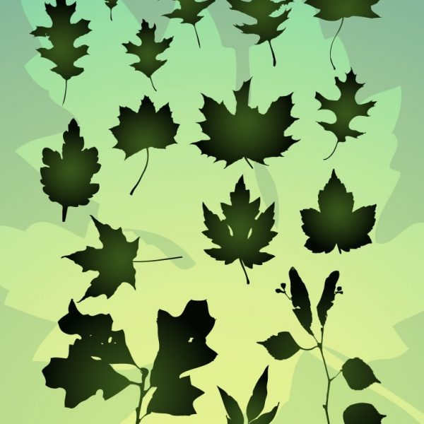 Vector Leaf Bundle pertaining to Organic Shapes In Nature Art