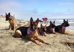 25 Best Pet-Friendly Vacations In America - The Flipkey Blog for Pet Friendly Vacation Ideas