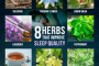 Herbs That Help You Sleep