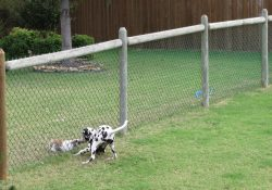 Cheap+Dog+Fence+Ideas | Free Issues Of Family Circle Magazine! | Dog for Cheap Fence Ideas For Dogs