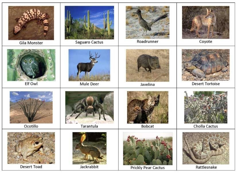 Desert Animals Pictures With Names | Desert Animals And Plants Names with List Of Desert Animals 37505