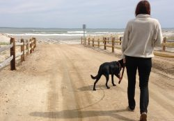 Dog Vacation Tips: 10 Best Vacation Ideas For Dog Owners for Dog Vacation Ideas