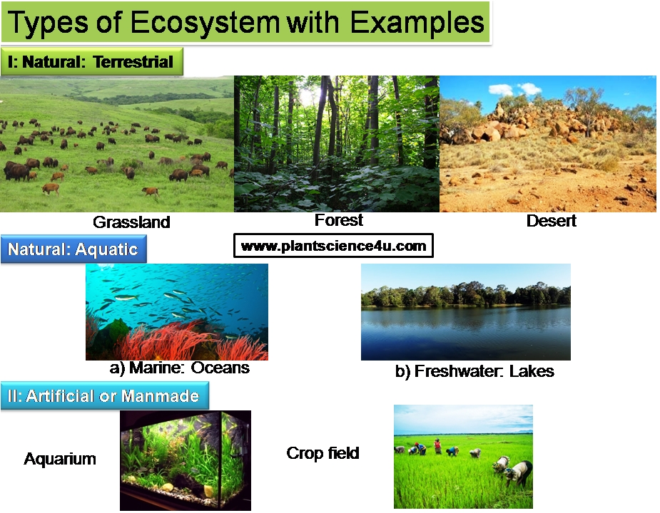 Ecosystem-Definition, Different Types And Examples | Plant Science 4 U in Examples Of Ecosystems 58146