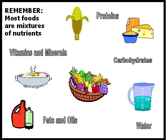 Examples Of Nutrients - Muco.tadkanews.co in Examples Of Nutrients 58107