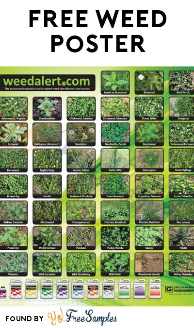 Free Weed Alert Poster [Verified Received By Mail] - Yo! Free Samples inside Free Weed Samples By Mail 59131
