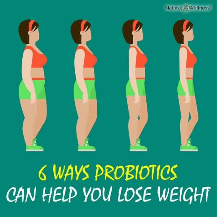 Probiotics Can Help You Lose Weight inside Will Probiotics Help You Lose Weight 47295