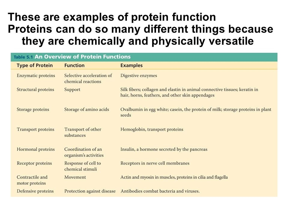 Proteins Account For More Than 50% Of The Dry Mass Of Most Cells inside 2 Examples Of Proteins 59083