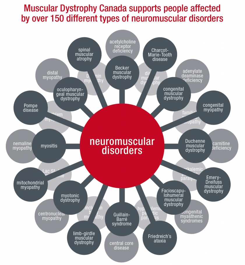 Types Of Neuromuscular Disorders | Muscular Dystrophy Canada within Muscle Diseases List 37110