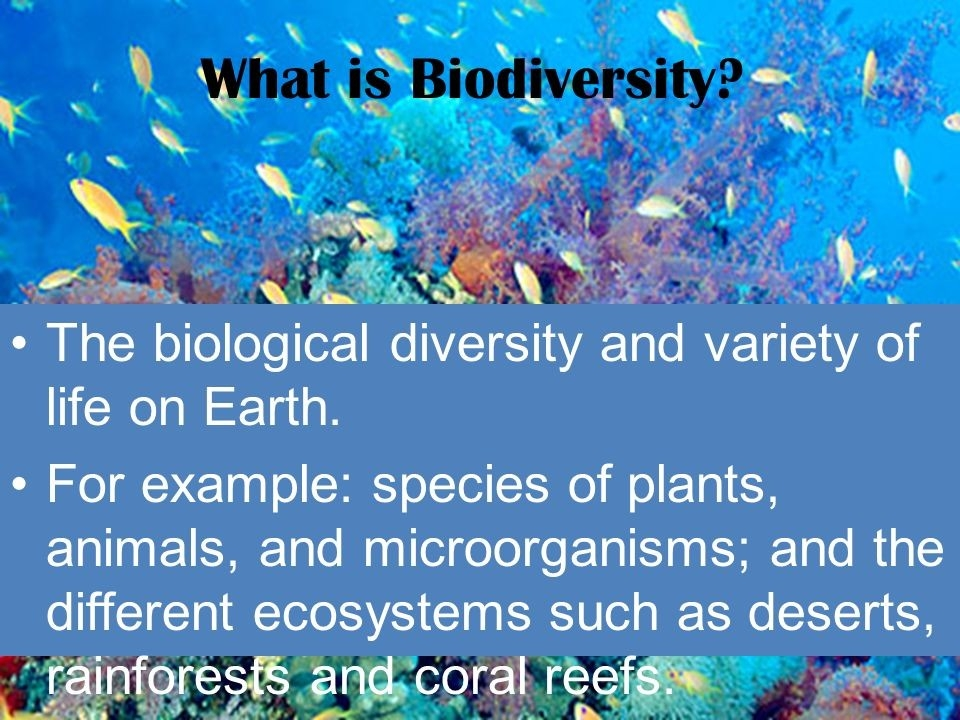 Why Is Biodiversity Important? Who Cares?. What Is Biodiversity? The pertaining to Example Of Biodiversity 57318