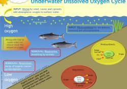 Dissolved Oxygen Meters Information | Engineering360 with regard to Dissolved Oxygen Definition