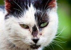 What Is A Feral Cat? | Petfinder inside Definition Of Feral Cat